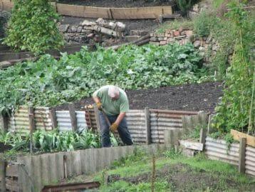 growing-a-vegetable-garden-in-melbourne