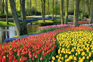 flower-bulbs-garden