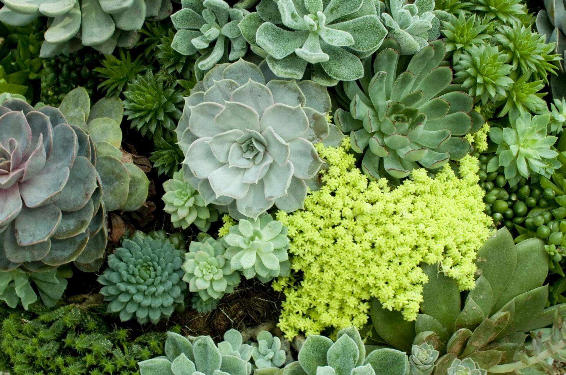 Succulent Ground Cover For A Unique Yard Feature